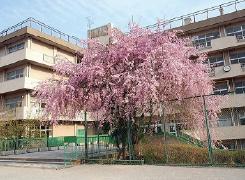 原山中学校